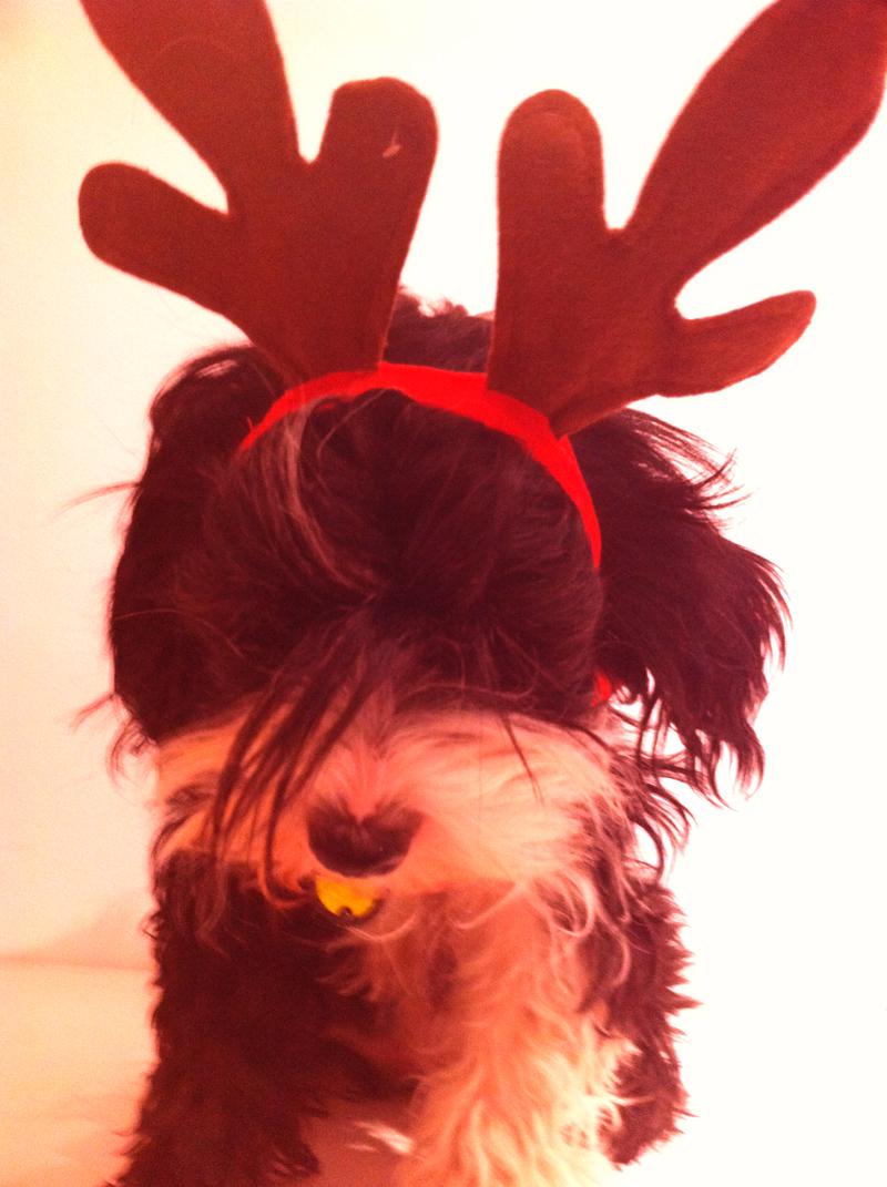 Self Service Dog Bullet as Christmas Reindeer