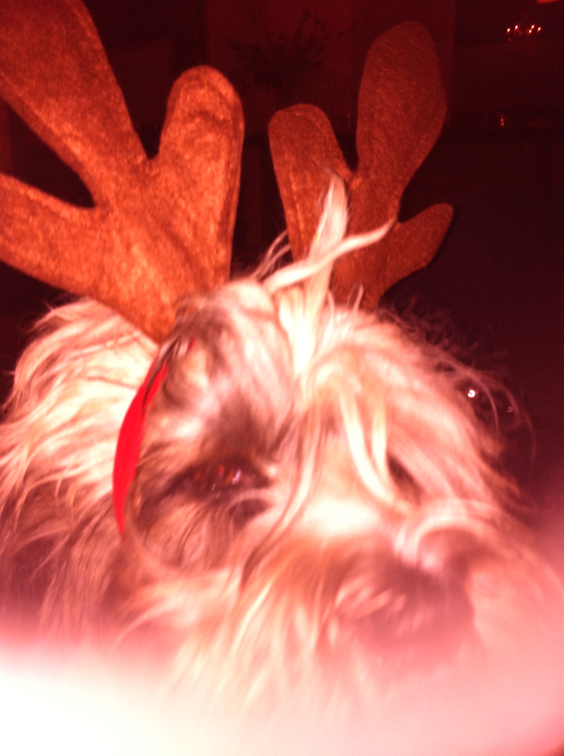 Self Service Dog Whisper as Christmas Reindeer