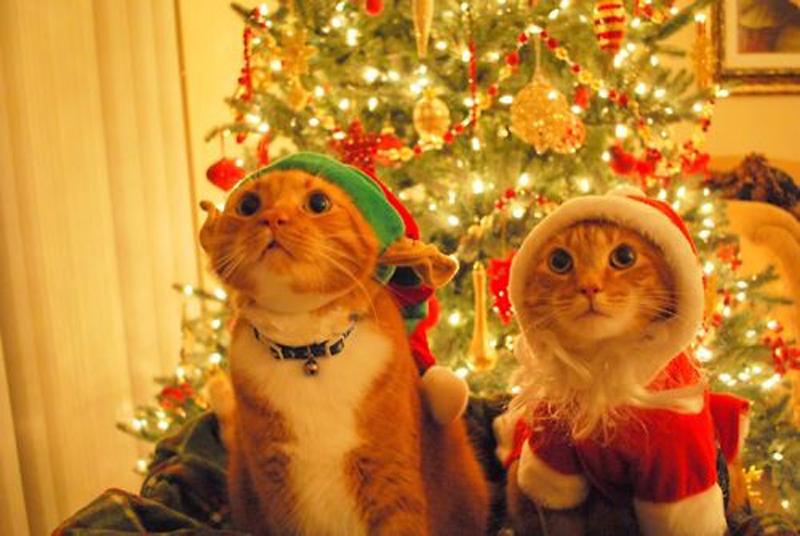 Xmas Kittens