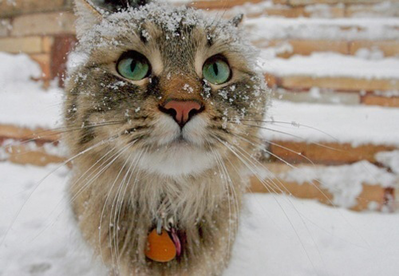 me0wbox tumblr snow kitten 2