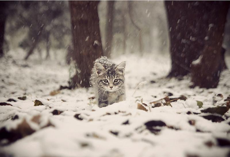 me0wbox tumblr snow kitten