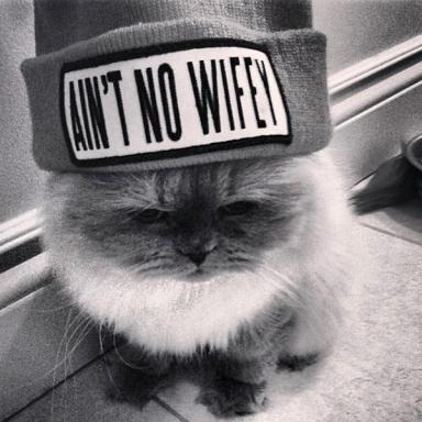 kitty cat in dimepiece aint no wifey beanie