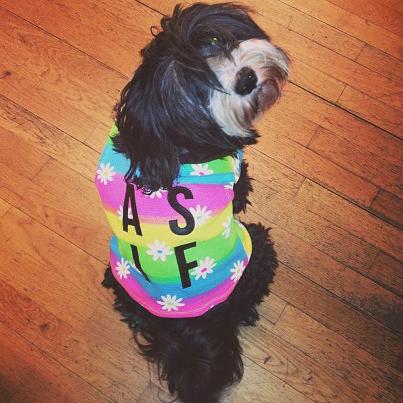 "Showroom dog Wispa in a Dimepiece ""As If"" crop top"
