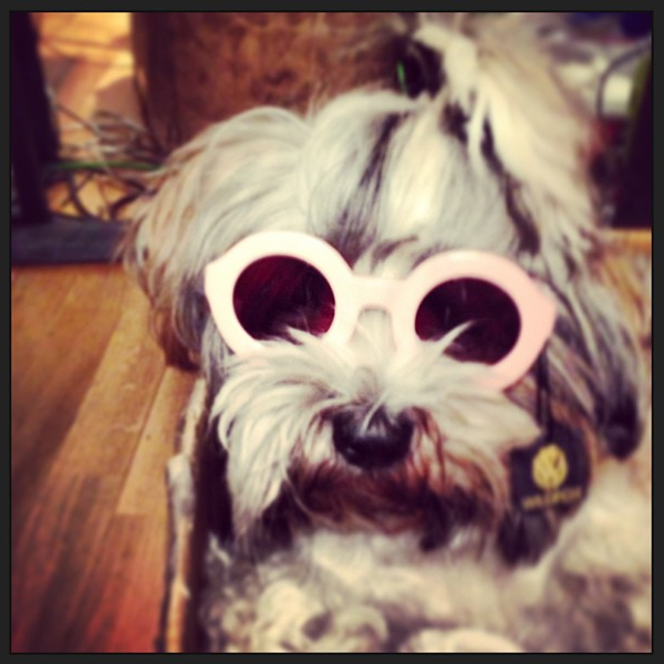 self service showroom dog bullit wildfox sun twiggy frame pink